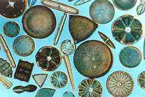 The Power of Diatom algae