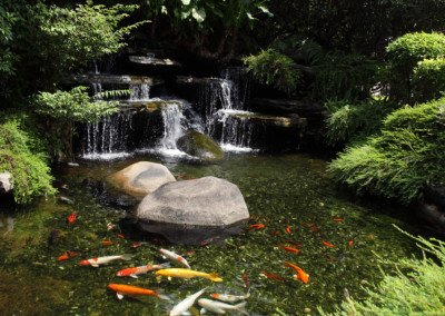 Fish & Koi Ponds