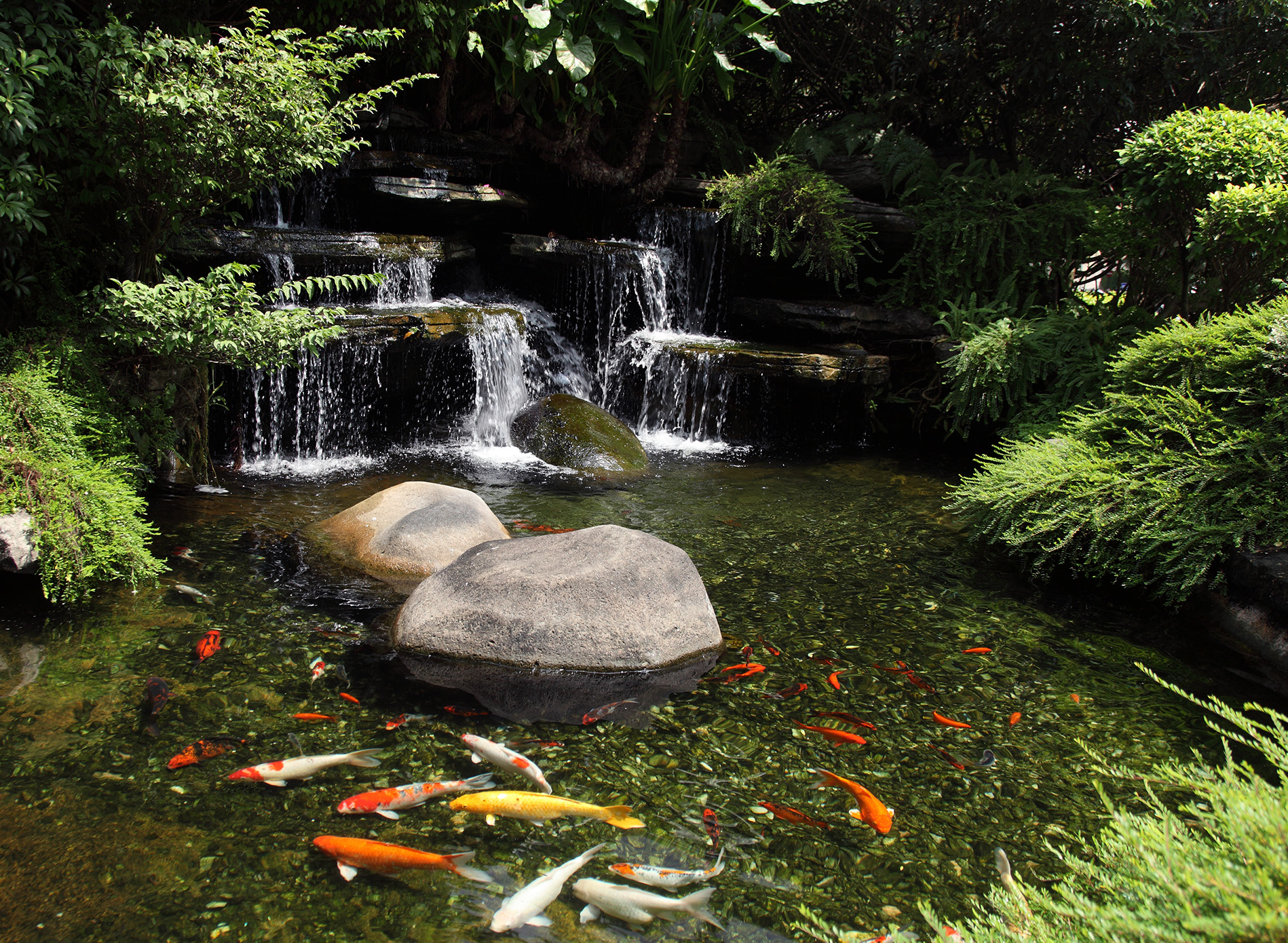 Fish koi ponds nualgi ponds for How to make koi pond water clear