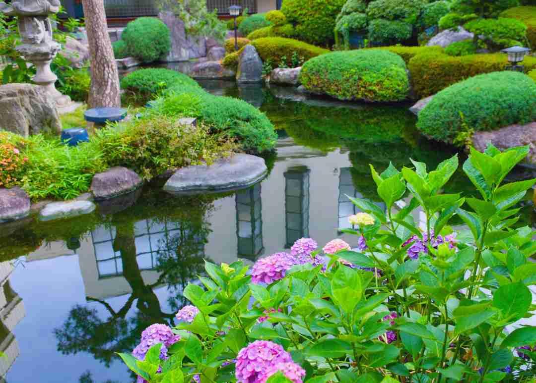 Water gardens nualgi ponds for Fish pond plants