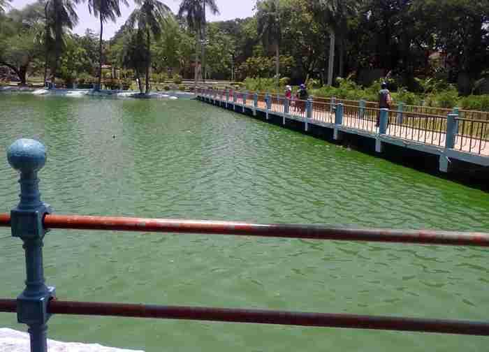 Indira Park Lake – Blue Green Algae Pollution