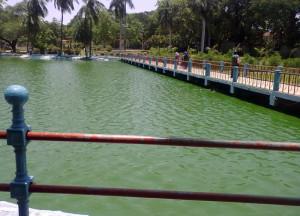 blue-green-algae-indira-lake