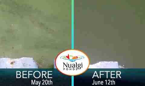 study to remove blue green algae