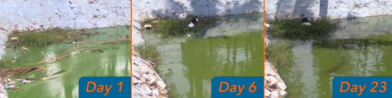 reduce blue green algae in ponds lakes