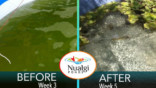 Green algae removed from pond quickly without algaecide at Cali Koi