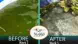 Christian S. Case Study of Nualgi Ponds