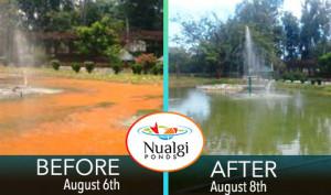 Pond Lake Algae Control Results Case Study
