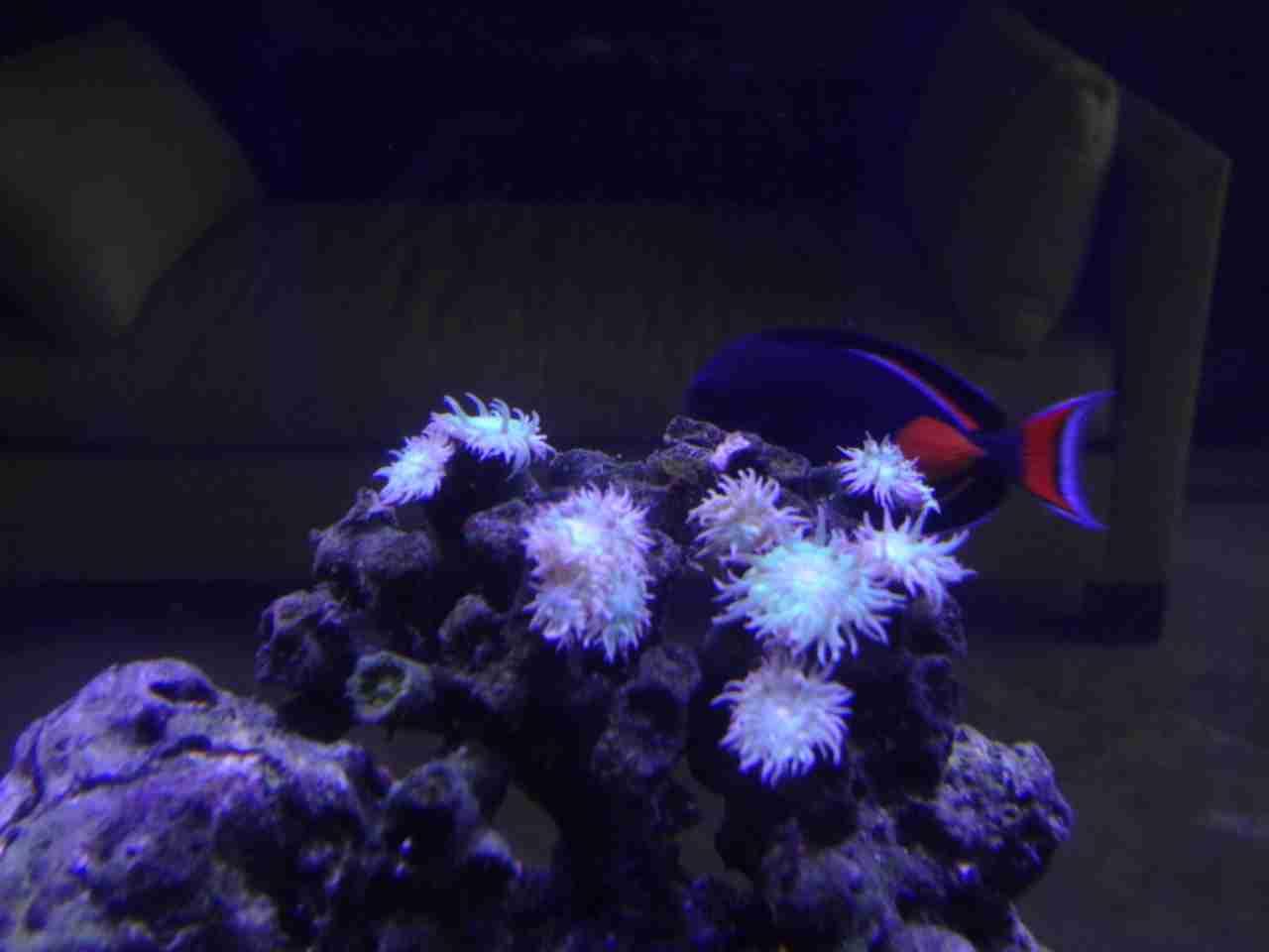 Nualgi Aquarium