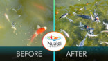 Joe's Pond Before & After Nuagli