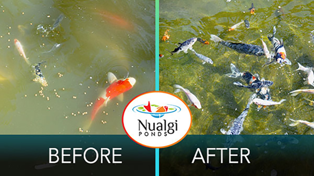 Buy nualgi ponds for healthy and crystal clear pond water for Koi pond volume calculator