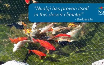 BarbaraJo B. – Koi Pond in the Hot Sonora Desert