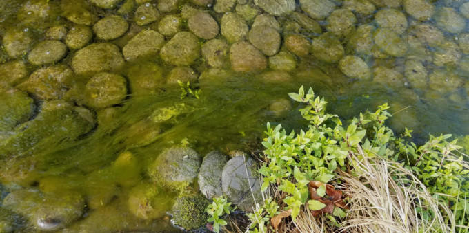 how to remove string algae from pond