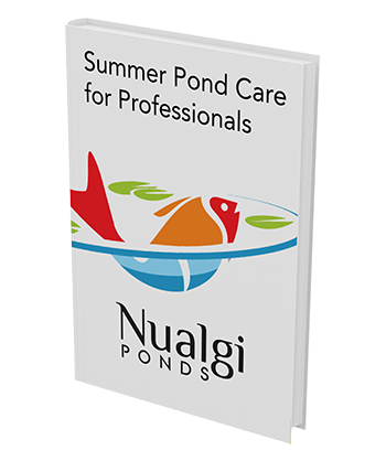 summer pond care guide graphic of ebook