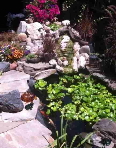 water garden vibrant plants
