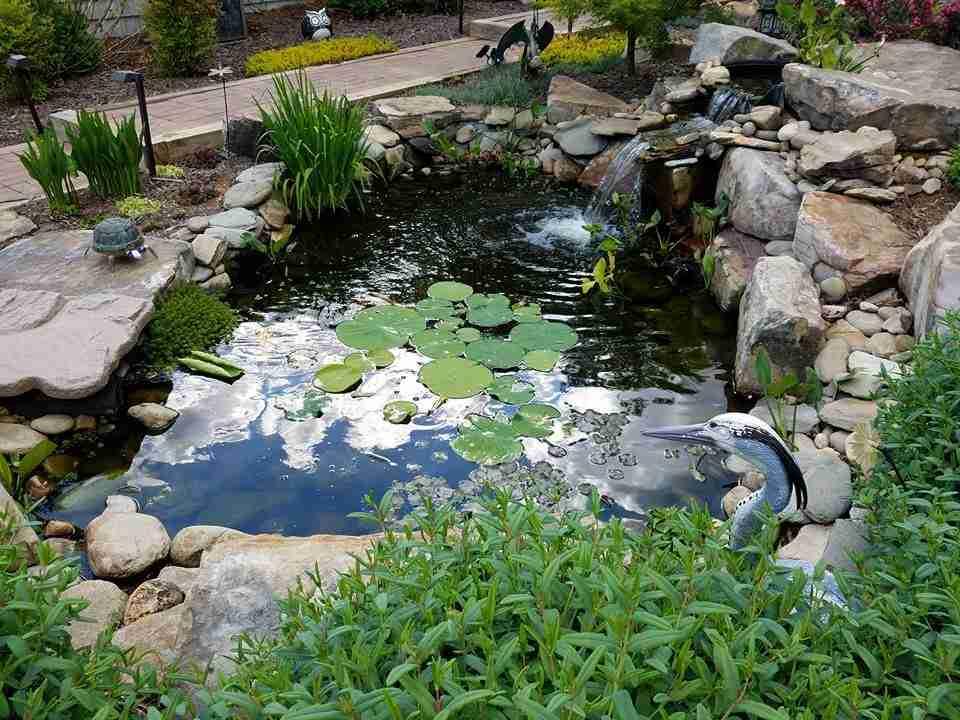 Kenny H Amazing Ponds Nualgi Ponds