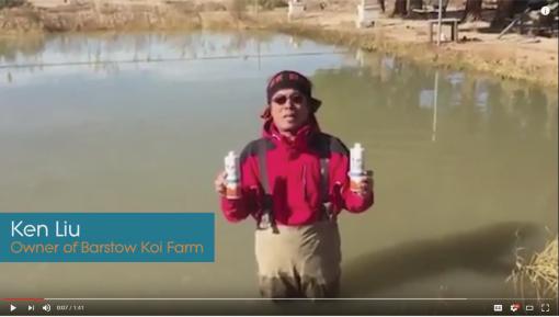 Professional Koi Dealer's Review of Nualgi Ponds
