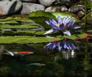 pond plants safe for wildlife
