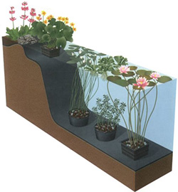 Pond plants to control algae balance your water garden for Floating plant pots