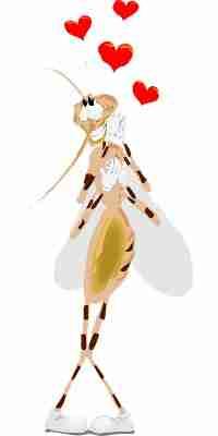 funny-mosquito