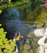 how-to-build-pond-naturally-beautifully