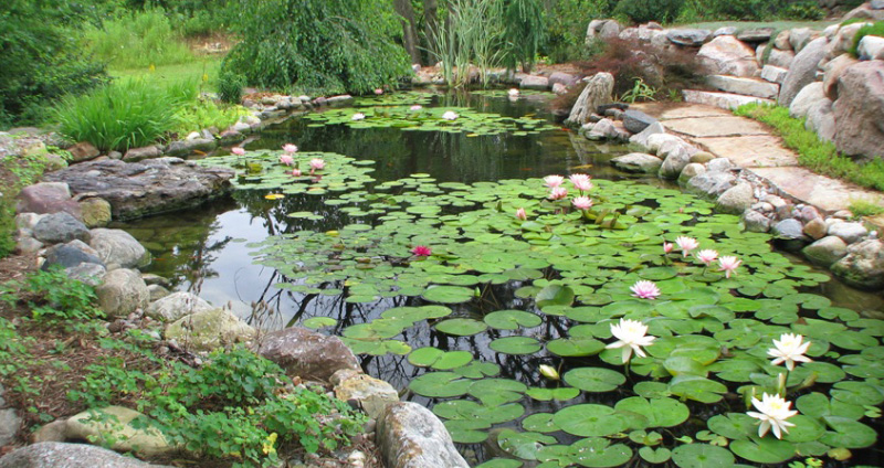 How to build a pond from scratch the natural way for How to build a small lake