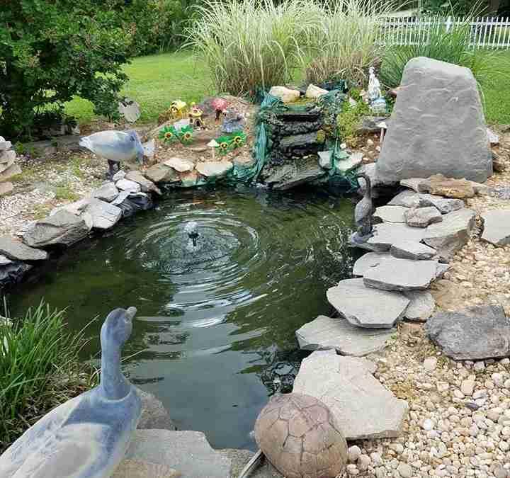 Cindy P. – String algae in small pond.
