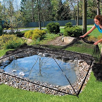 Install a net over your pond to keep leaves out in fall