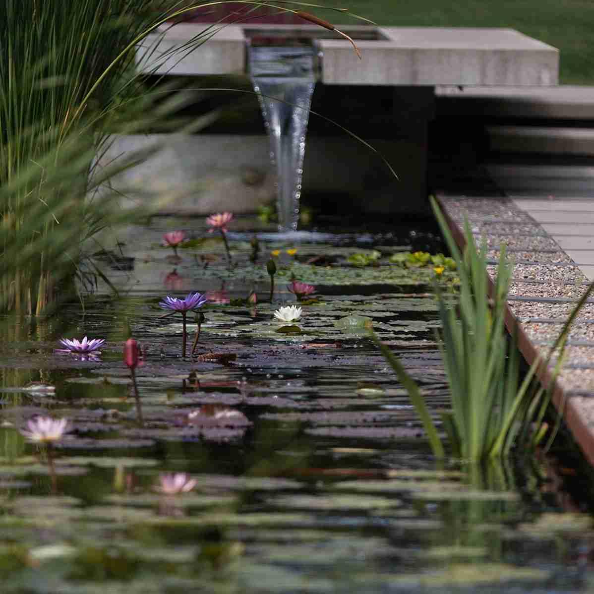 Winner of Nualgi's Best Water Garden Photo 2018