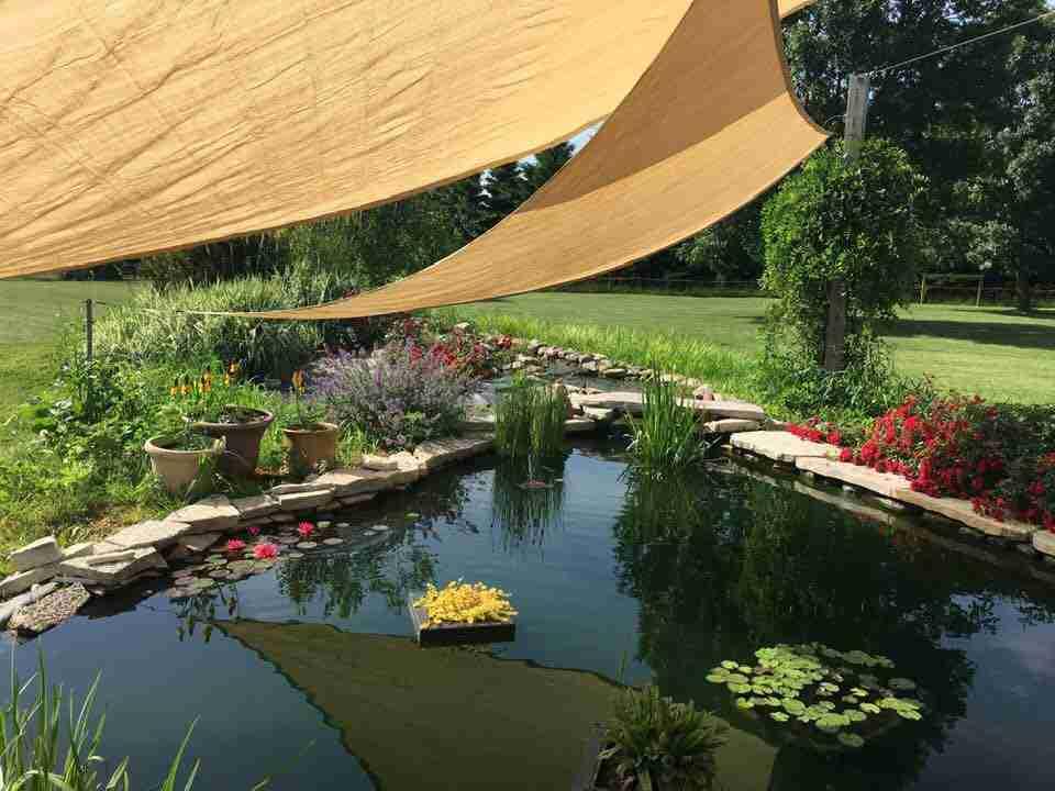 Backyard pond with triangle sun shade -Kari H