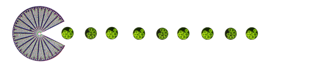 Diatom pac man